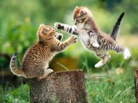 Cat_fight